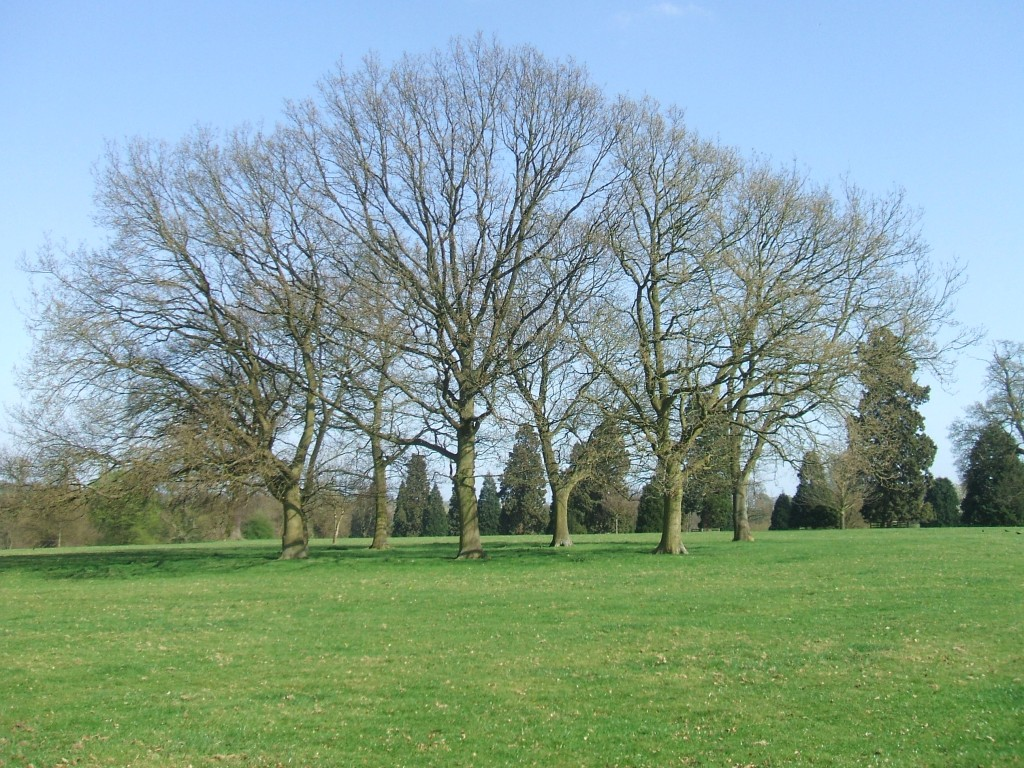Gorhambury estate
