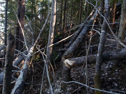 Beaver-land
